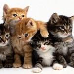 Mekan Arındırma Vakası - Eve Giren Kediler