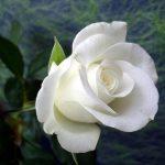 Baş Melek Mikail'den Yaşam Alanı Temizliği Üzerine Mesaj